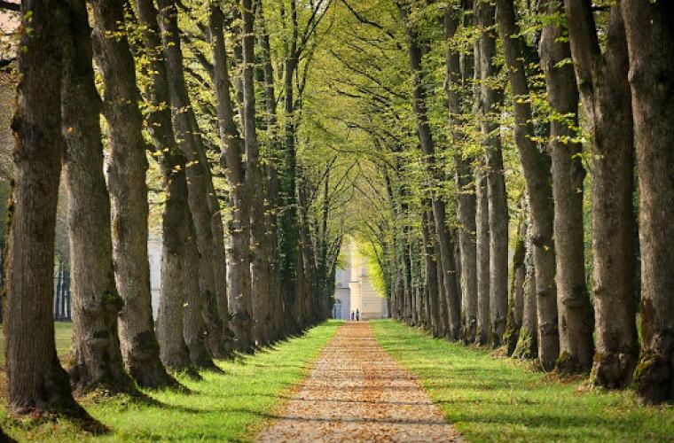 schimbarile-climatice-au-fortat-copacii-sa-moara-tineri