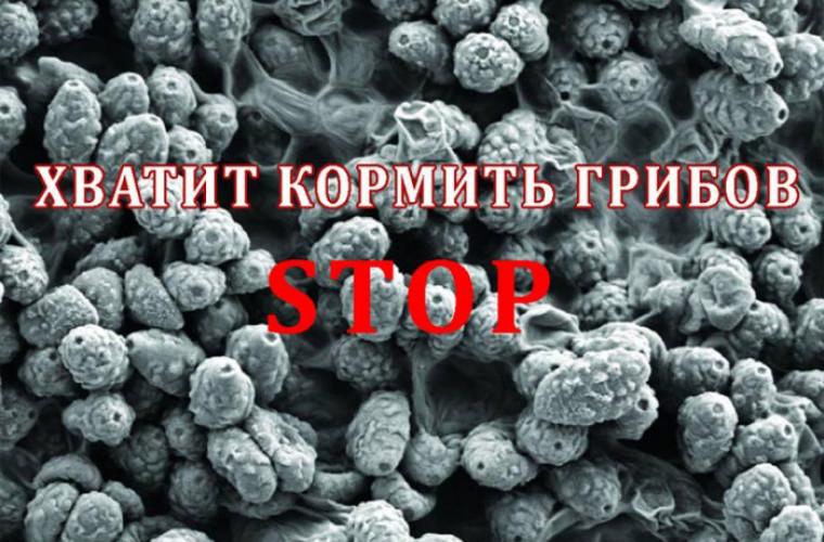 Nu hrăniți ciupercile din organism