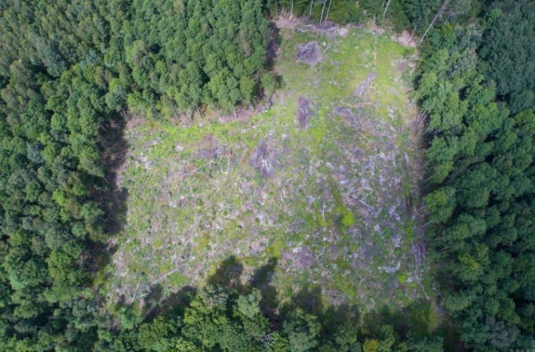 Carpații fără vegetație: Încă o problemă moștenită de Zelenski de la Poroșenko