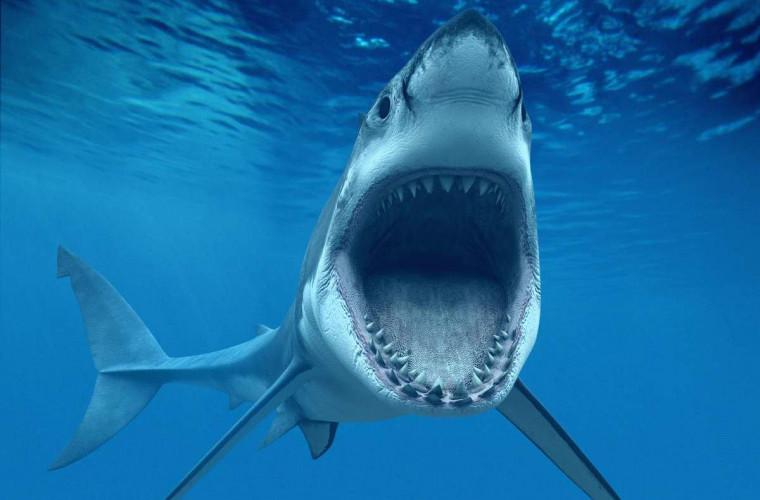 Un scafandru neînfricoșat a indus în transă un rechin ucigător