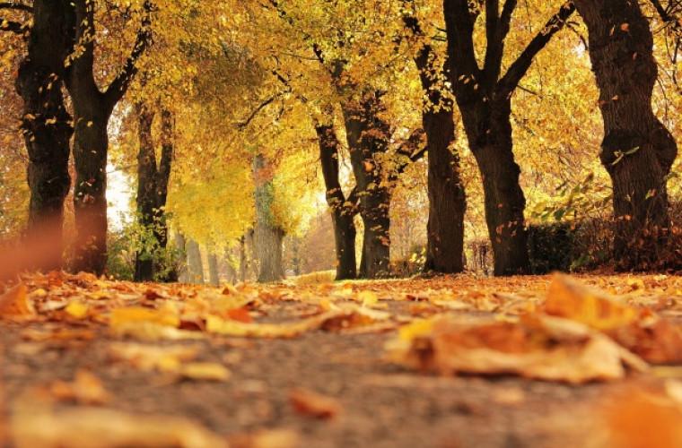 De ce îngălbenesc frunzele toamna?