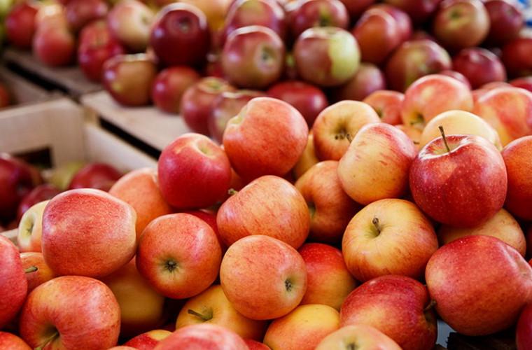 În Găgăuzia se așteaptă o recoltă mai mică de mere faţă de anul 2018