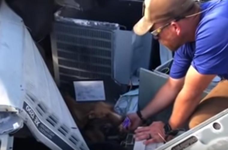 Descoperire miraculoasă sub dărîmăturile unei clădiri, după uraganul Dorian (VIDEO)