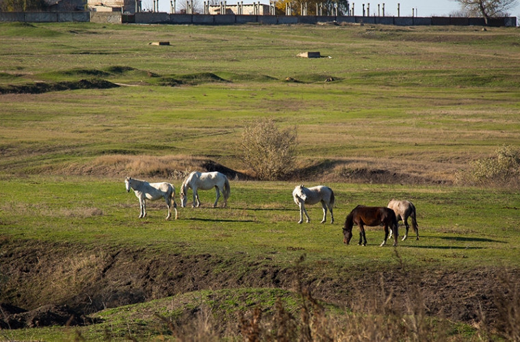 gagauzia-vrea-sa-creeze-un-complex-turistic-in-baza-unei-ferme-de-cai-din-ceadir-lunga