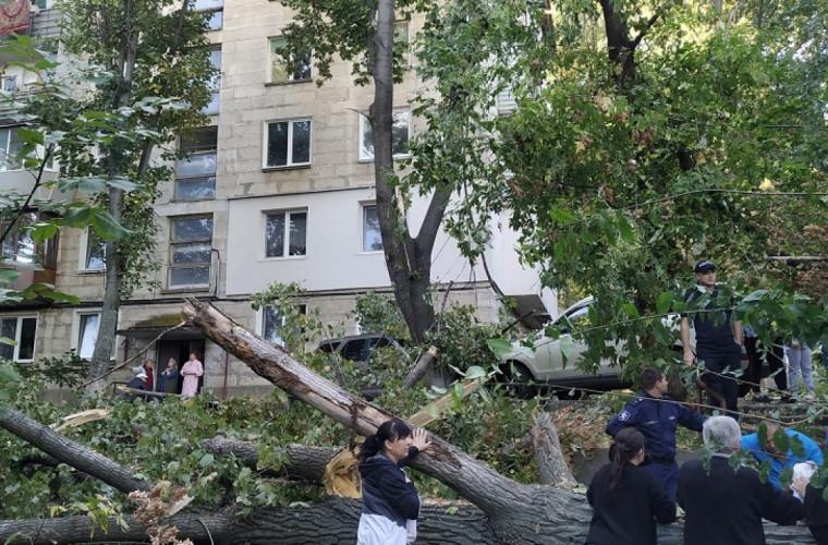 Un copac a căzut peste două mașini (FOTO)