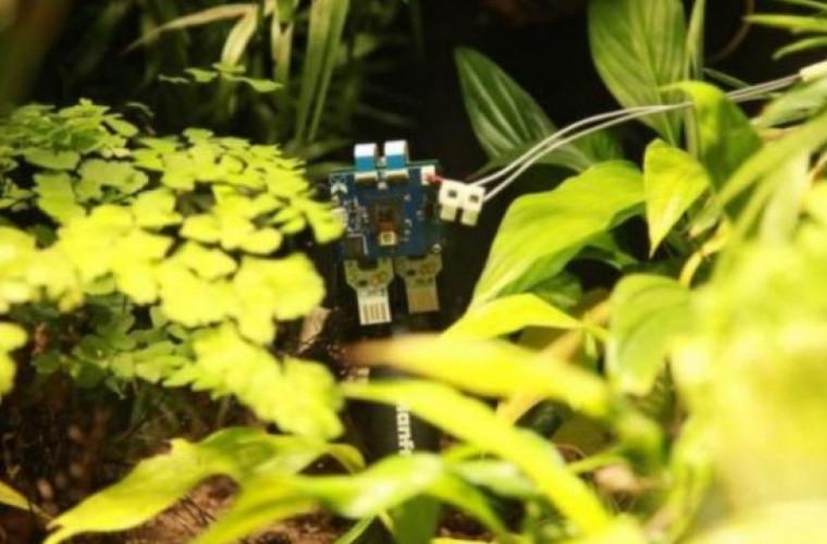"""Experiment: Prima plantă din lume care """"şi-a făcut un selfie"""""""