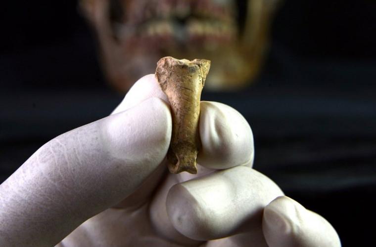 Arheologii au găsit un colier neandertal din gheară de vultur