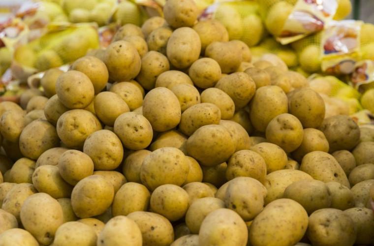ANSA: 95% din loturile de cartofi care vin în Moldova sînt infectate cu o bacterie