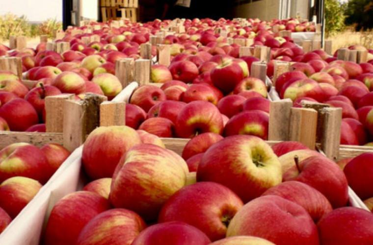 Молдова сможет экспортировать яблоки в Индию