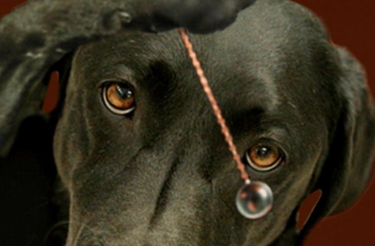 Autoritățile din Bălți speră să scape de cîini cu ajutorul hipnozei