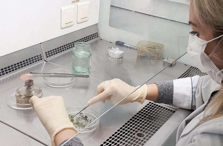 Inteligența artificială, specializată și în creșterea plantelor