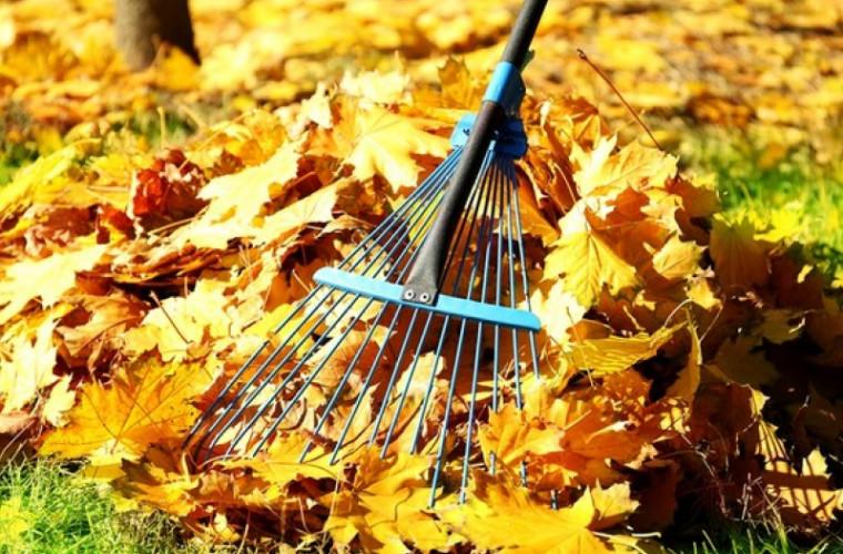 Frunzișul din Chișinău va dispărea îm timp de o săptămînă