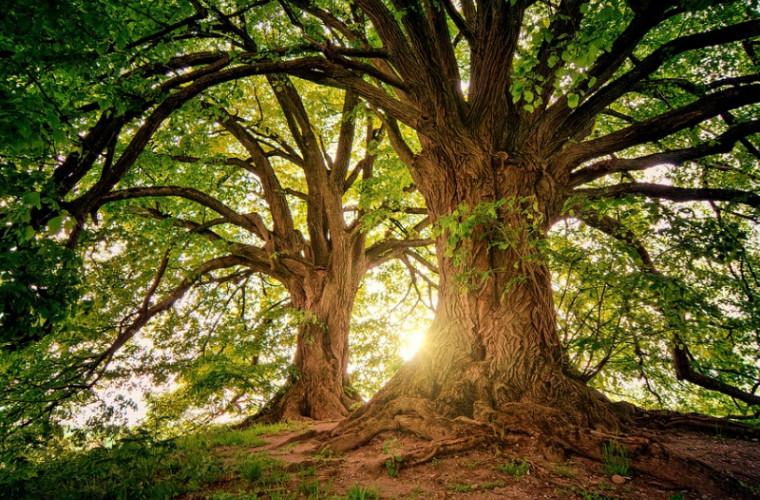 În SUA a fost descoperită cea mai veche pădure din lume