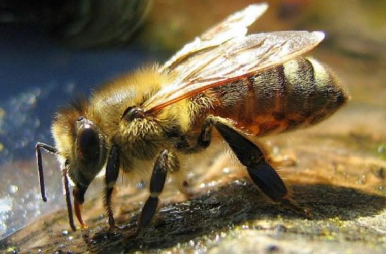in-california-o-strada-inchisa-din-cauza-unui-roi-de-albine-ucigase