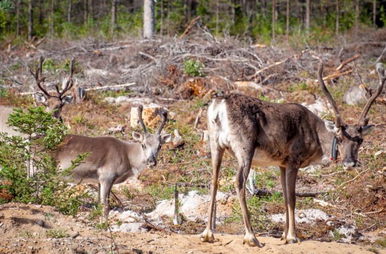 animalele-care-dispar-din-cauza-schimbarilor-climatice-joaca-un-rol-important-in-ecosisteme