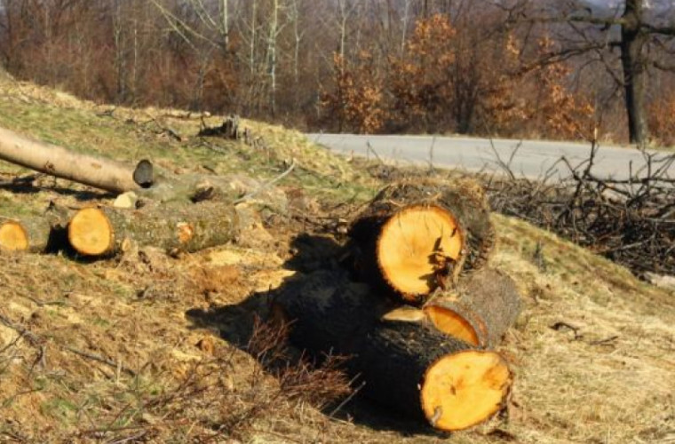 Tăierile ilegale au distrus o pădure întreagă din raionul Anenii Noi