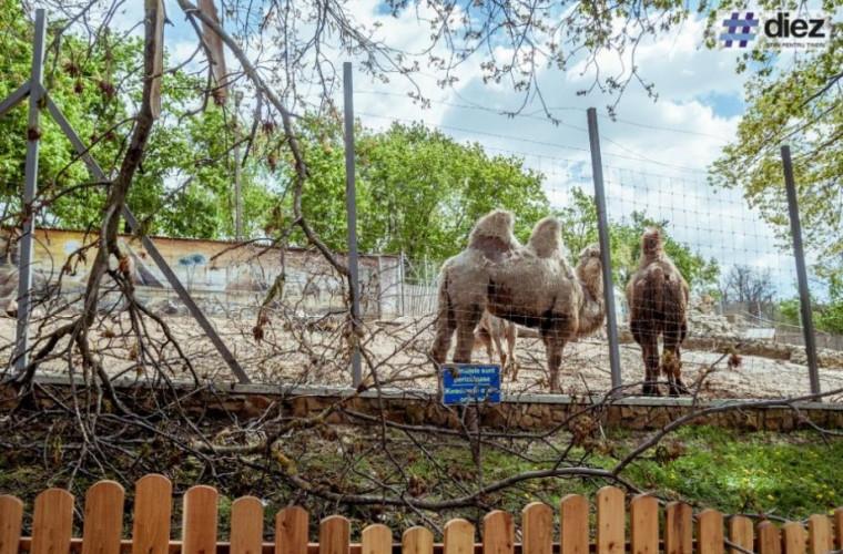 animalele-din-doua-gradini-zoologice-din-tara-in-carantina