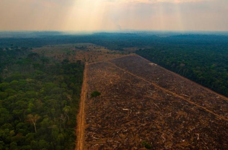 Defrișările din pădurea amazoniană pe timp de pandemie, au atins un nou record