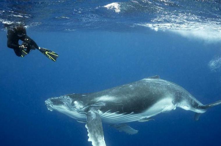 amenda-de-27-de-mii-de-dolari-pentru-un-barbat-care-a-salvat-o-balena
