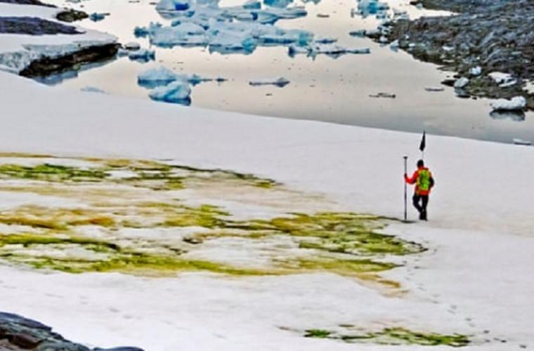 in-antarctica-a-aparut-zapada-verde-din-cauza-schimbarilor-climatice