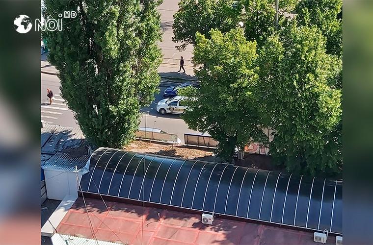 copacii-seculari-de-la-botanica-prizonierii-tarabelor-vechi-ce-spun-autoritatile