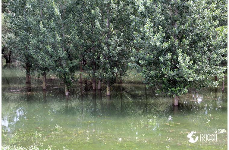 cit-de-mult-este-moldova-amenintata-de-pericolul-unor-inundatii-raspunsul-unui-ecologist