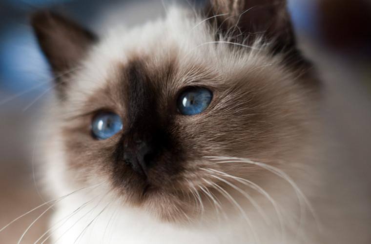 O pisică a supraviețuit, după ce a adormit în mașina de spălat