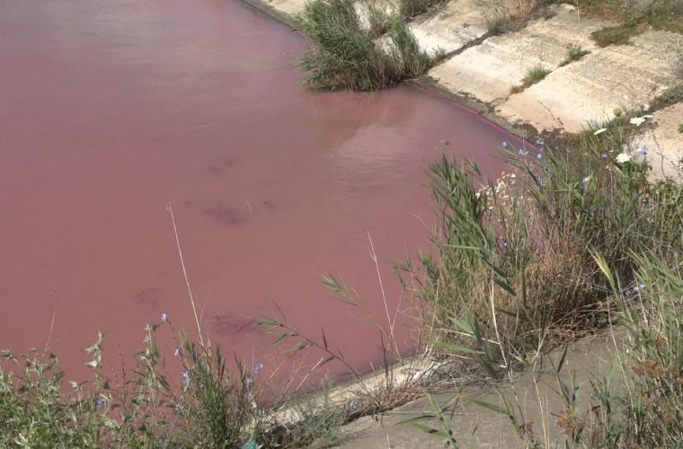Apa din canalul de canotaj de la Bălți a devenit roz (VIDEO)