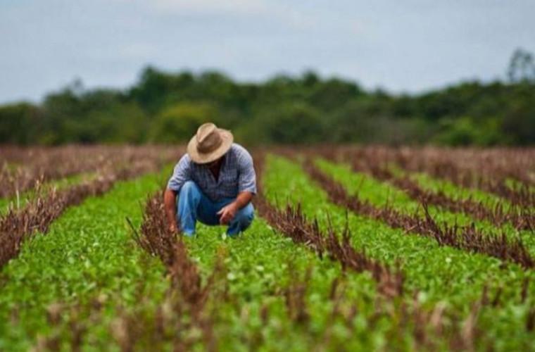 Subvenții în agricultură pentru moldovenii reveniți acasă