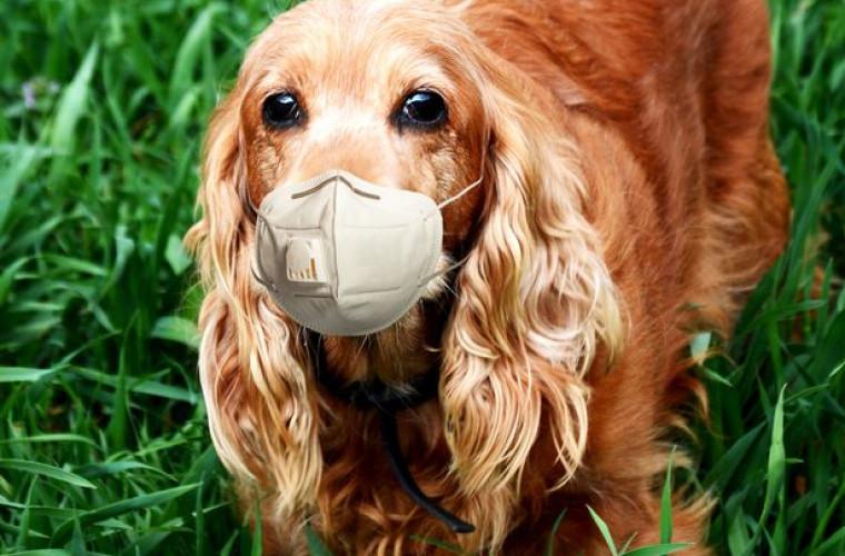 avertismentul-expertilor-purtarea-mastilor-de-catre-animale-le-poate-cauza-moartea