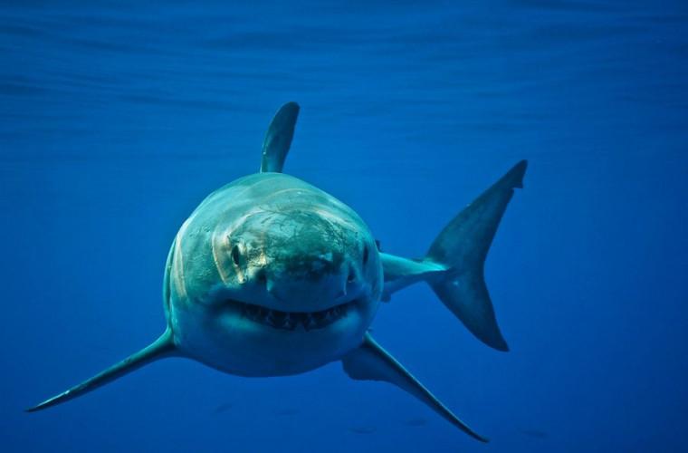 un-barbat-a-lovit-cu-pumnii-un-rechin-salvindu-si-sotia-de-la-moarte
