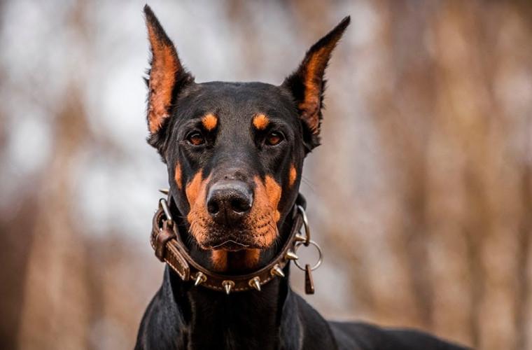 Germania: Posesorii de animale vor fi obligați să își plimbe cățeii de două ori pe zi