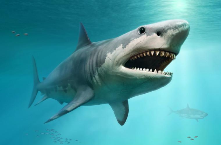 rechinul-preistoric-megalodon-s-a-dovedit-a-fi-mai-mare-de-16-m-in-lungime