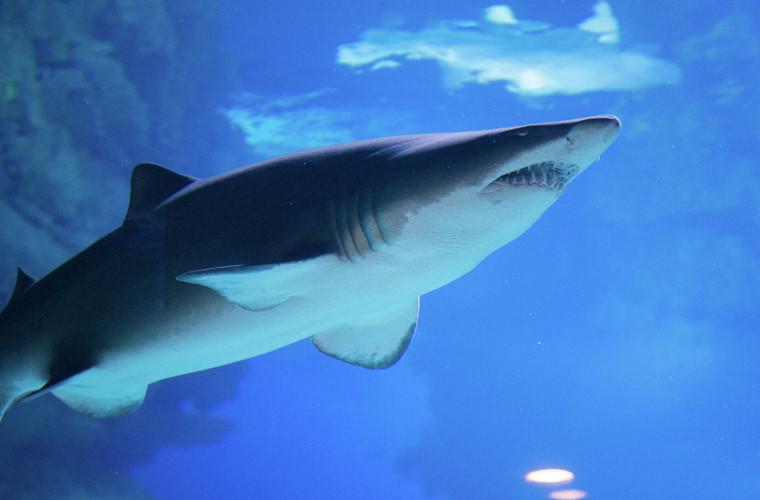 in-australia-un-rechin-a-atacat-un-sufer-dar-a-ramas-fara-un-dinte