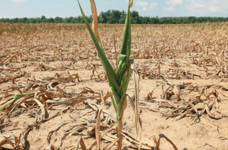 in-domeniul-agriculturii-ar-putea-fi-declarata-stare-exceptionala